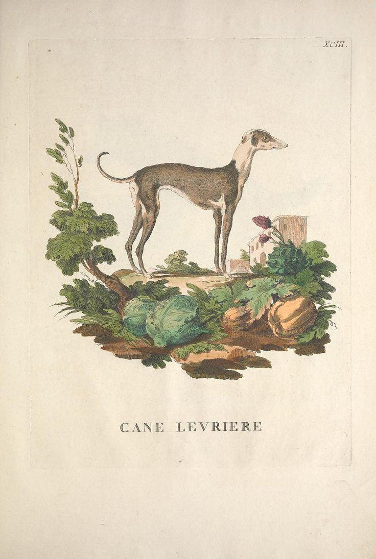 v. 2 - Descrizioni degli animali : - Biodiversity Heritage Library