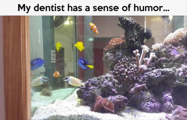Finding Nemo tank setup at a dentist's office: Giggle, Findingnemo, Dentists, Funny Stuff, Funnies, Humor, Disney, Finding Nemo