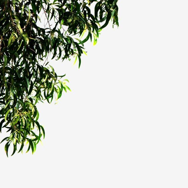 Transparent Leaf Corner For The Frame Frame Corner Summer Png Transparent Clipart Image And Psd File For Free Download