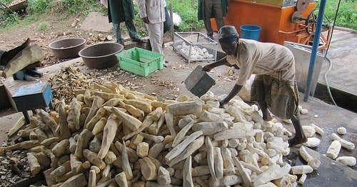 The Yam Growers Association of Nigeria (YAGAN) has accused the Federal Government of neglecting the countrys yam farmers in its nascent yam export drive. Alhaji Shuaibu Idris the President of the association expressed the viewpoint on Tuesday in an interview with News Agency of Nigeria (NAN) in Abuja. He said that the government had failed to carry the association along in its yam export initiative.  He underscored the need to involve YAGAN in all the processes of the yam export programme…