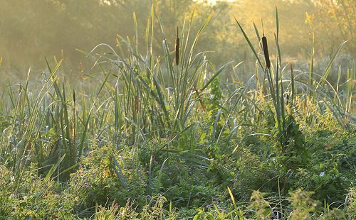 Stotfold reserve