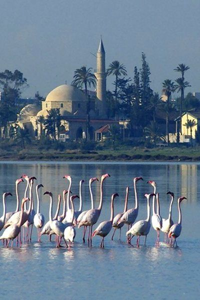 Salt Lake And Hala Sultan Tekke - Larnaca, Cyprus