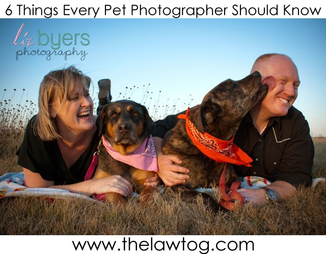 6 Things Every Pet Photographer Should Know