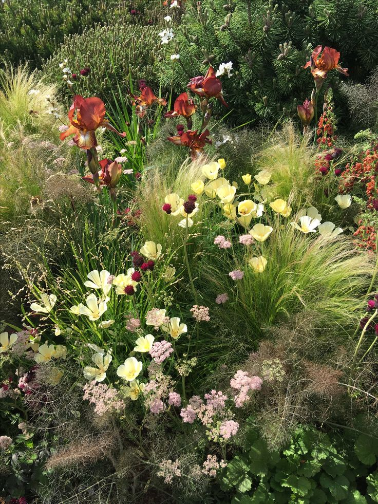 Planting on Texture radio2 garden rhsChelsea