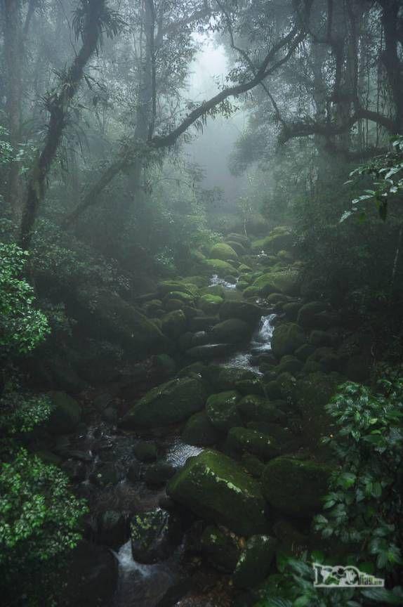 Riacho corta a mata úmida na parte baixa do Parque Nacional da Serra dos Órgãos, no Rio de Janeiro, portaria de Teresópolis