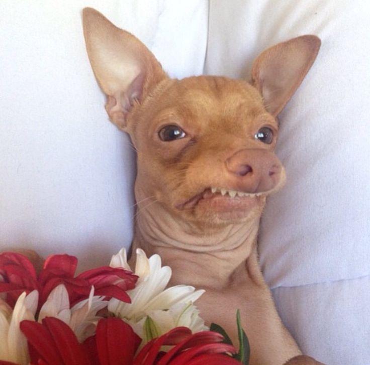 lmao i love this doggy hehe omgggg rofl pinterest doggies