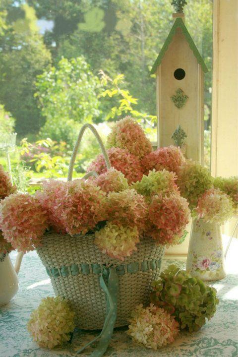 Lovely big basket stuffed full of hydrangea blooms