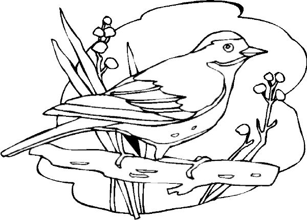94 Coloring Pages For Birds