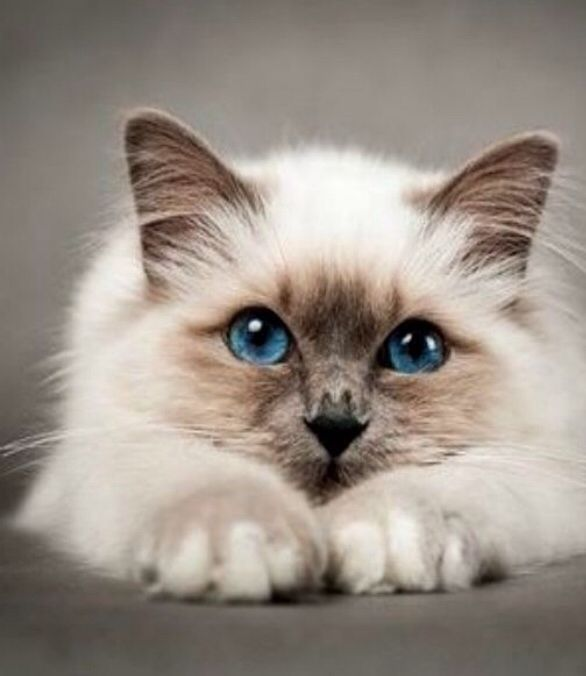 Milkypaw (white and brown, She-Cat, medicine cat apprentice, Blizzardstar's kit)