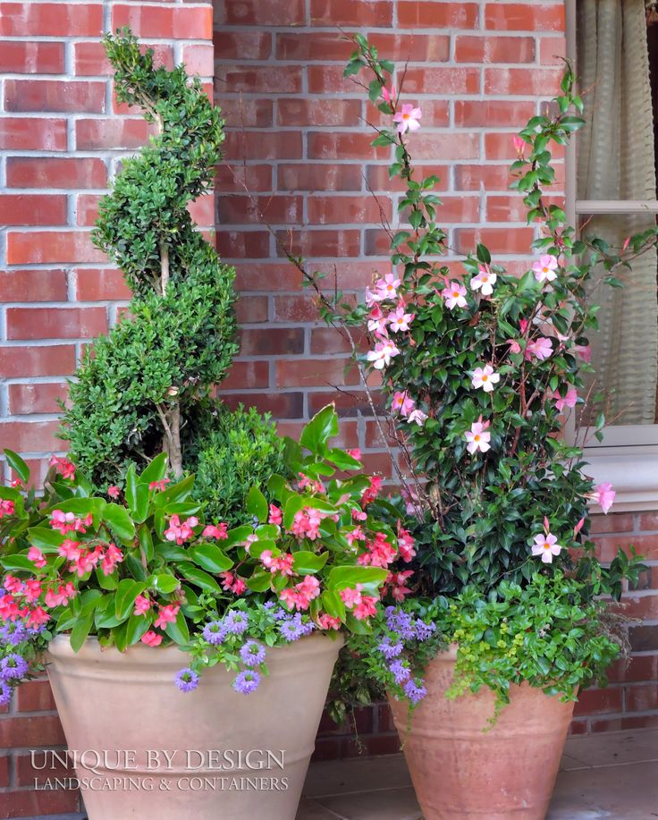17 Best Images About CONTAINER GARDENING- UNIQUE BY DESIGN