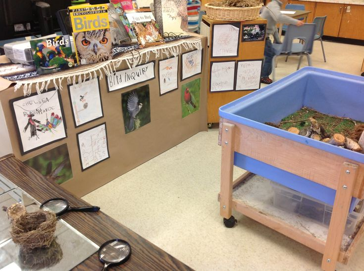 kindergarten Bird Inquiry: A place to explore, wonder, document, create, and share!