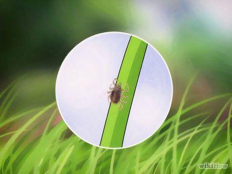 Image intitulée Get Rid of Ticks Around Your Home Step 7