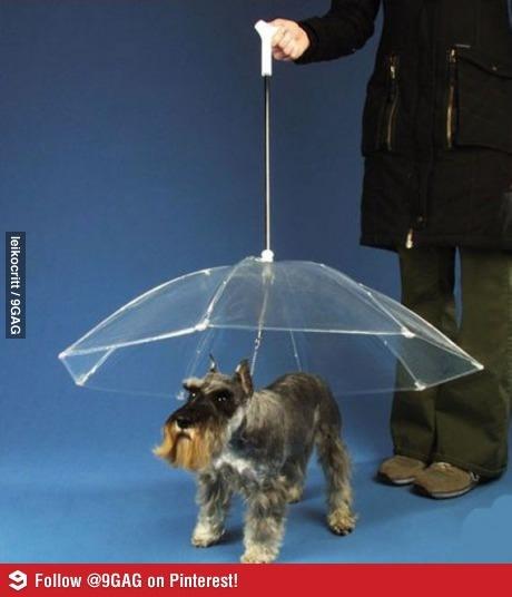 Umbrella for dogs