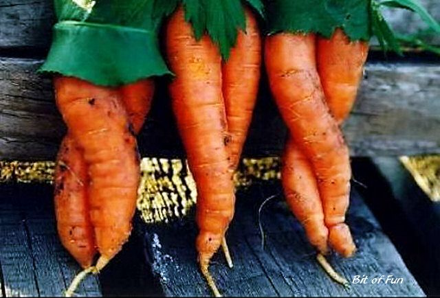 ... you thought vegetables couldn't be sexy, well meet the carrot sisters