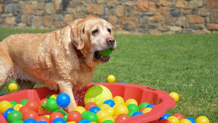 Εκτροφείο, ξενώνας και εκπαιδευτήριο σκύλων Kreta Rex House Δημοσιεύτηκε σήμερα η ιστοσελίδα της σχολής Kreta Rex House με έδρα το Ηράκλειο, μια αδειοδοτημένη σχολή με έμφαση στην εκτροφή και στην εκπαίδευση σκύλων. https://www.imonline.gr/gr/kataskevi-istoselidas/ektrofeio-ksenonas-kai-ekpaideutirio-skulon-kreta-rex-house-1248 #imonline #website #webdesign