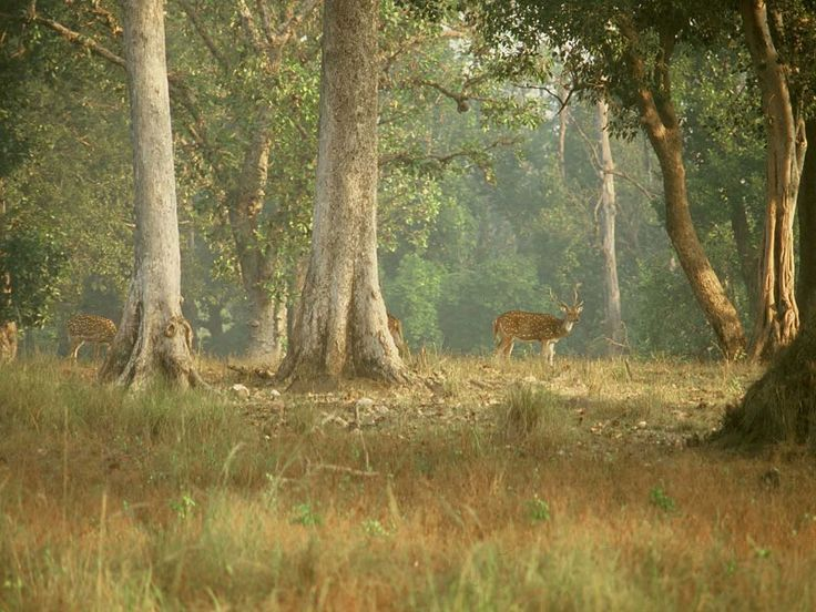 Jaldapara National Park - in West Bengal, India