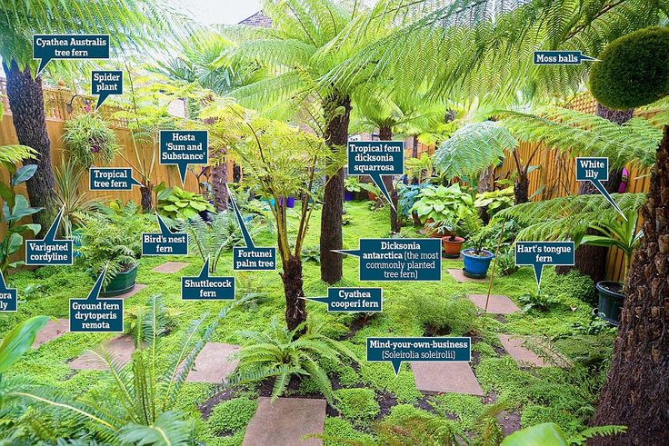 Best 25 small tropical gardens ideas on pinterest for Garden trees london