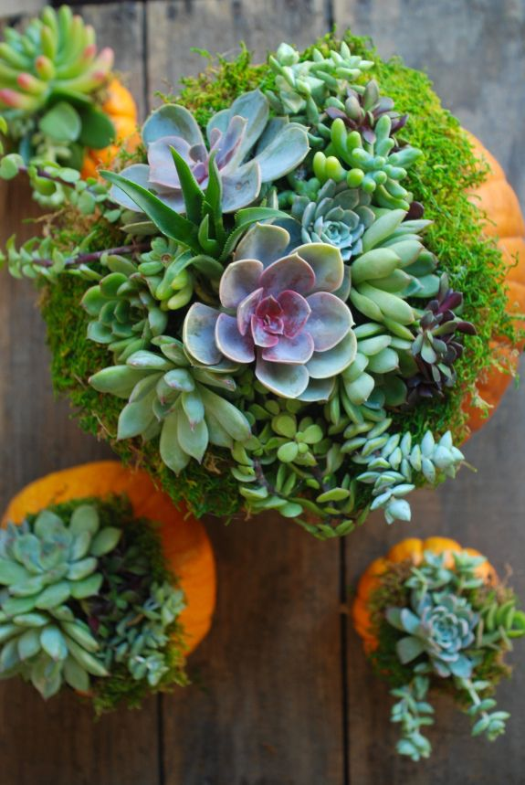 A succulent & pumpkin arrangement that is beautiful and easy to make! The best part is you can keep the succulents long after pumpkin season.