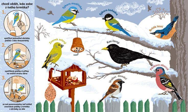 obrázky ptáků pro děti - Hledat Googlem