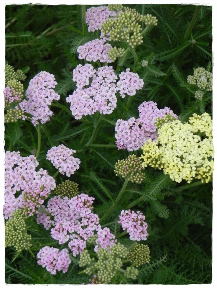 22 Best Gardening & Landscaping In Austin Zone 8b Images ...