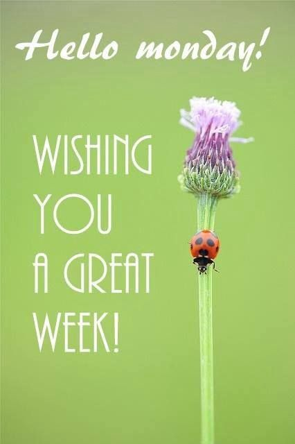 Hi Good Morning Quotes: Best 25+ Monday Wishes Ideas On Pinterest