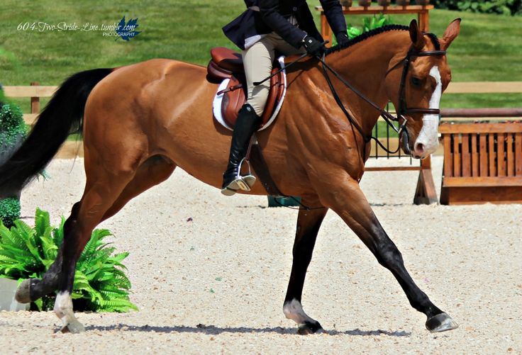 Equitation Invasion What Kind Of Saddle Is That Its A CWD Via Grandprix Dreams