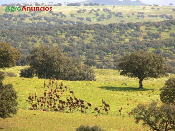 Venta de Finca de monte y dehesa con caza mayor en Jaén
