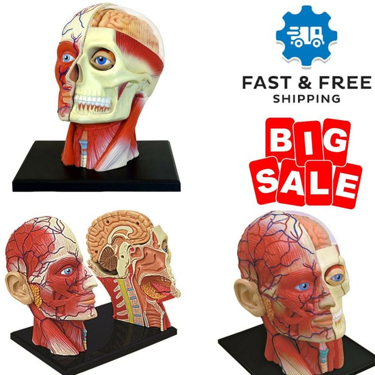 Human Body Head Anatomy Model 4D Vision Kids Learning Medical Science Education #FameMaster #45modelcontains14detachablepartsanddisplaystand