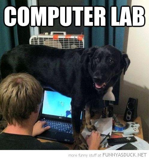 funny computer IT LAB