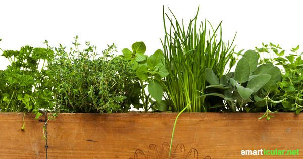 die besten 25 pflanzkasten ideen auf pinterest kr utergarten pflanzkasten garten. Black Bedroom Furniture Sets. Home Design Ideas