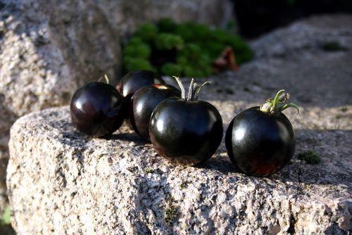 [BLACK FRIDAY] Le Noir à Rungis : les Tomates noires - Black food