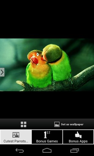 Bcute and beautiful parrots wallpapers on your phone and tablet bcute and beautiful parrots wallpapers on your phone and tablet in one single click cutest parrots wallpapers hd is a simple wallpaper app that voltagebd Gallery