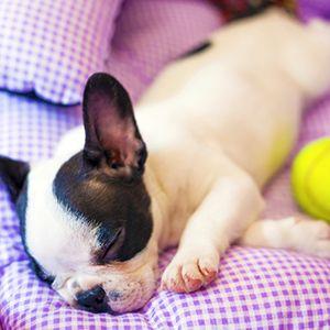Aprenda a higienizar corretamente a casinha do cão, eliminar odor impregnado em roupas e tecidos, limpar urina e mais
