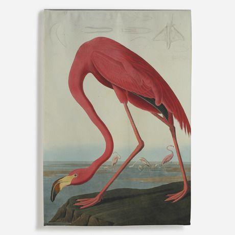 'Greater Flamingo, Phownicopterus Ruber' Wall Hanging
