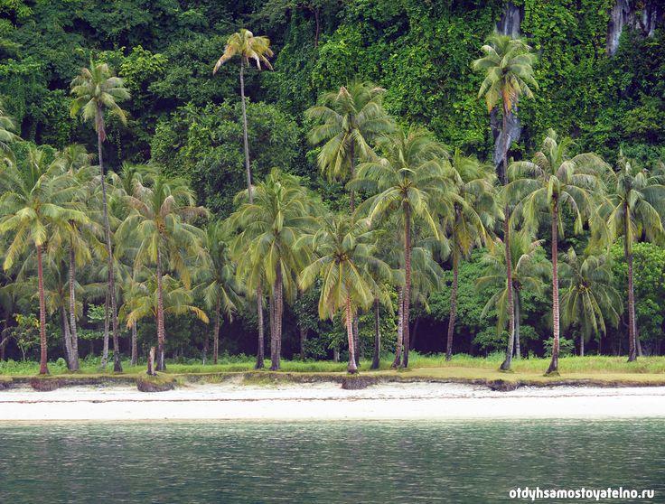 Красивые пляжи с пальмами и скалами в Эль Нидо, Палаван, Филиппины