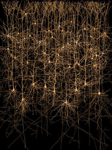 Neurons in a column  by Ethan Hein