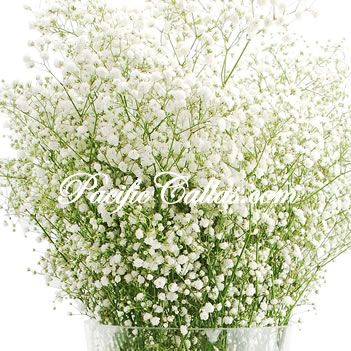 artificial babys breath | breath other wedding flowers baby s breath million stars