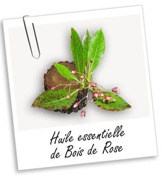 Huile essentielle de Bois de Rose BIO   - Bibliothèque - Aroma-Zone