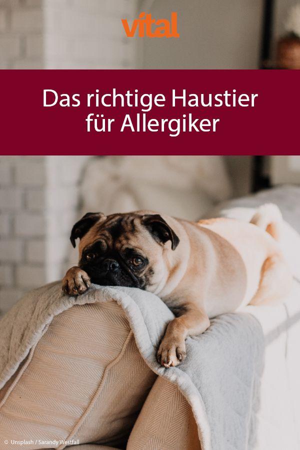 Das Richtige Haustier Fur Allergiker Haustiere Tier Fakten Hunde