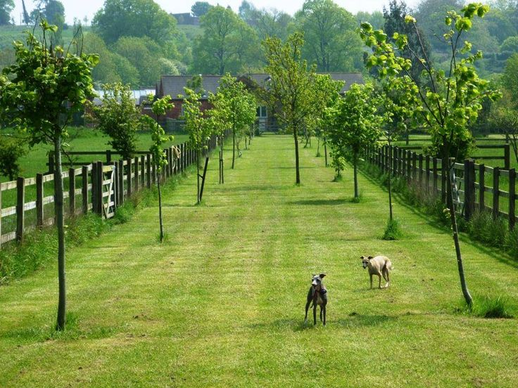 UK › Warwickshire › Hayfields Luxury Dog Hotel