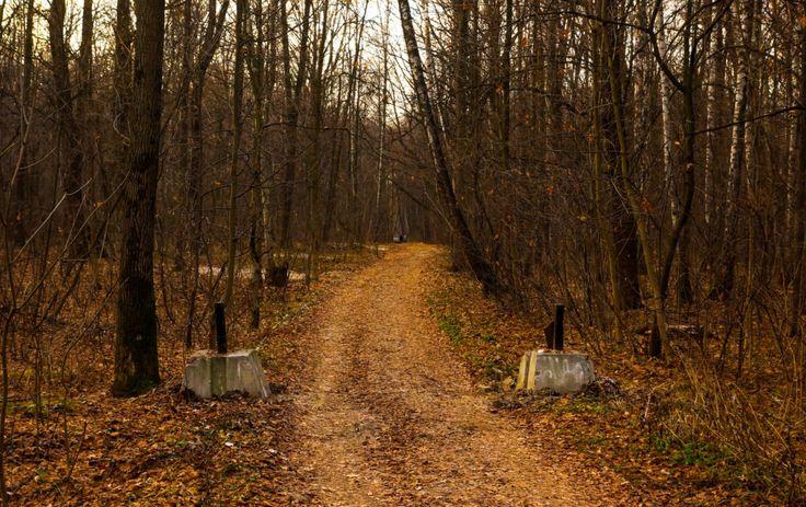фото осеннего парка