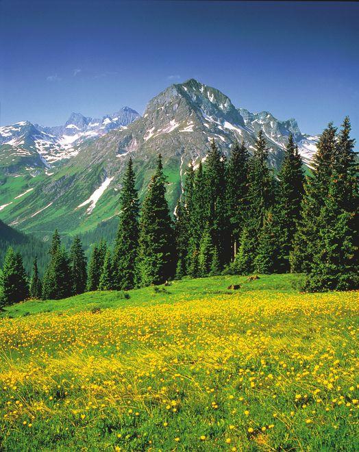Hiking in Vorarlberg's lush meadows. © Österreich Werbung/ Mallaun #austria #vorarlberg #hiking #omeshorn #lechamarlberg