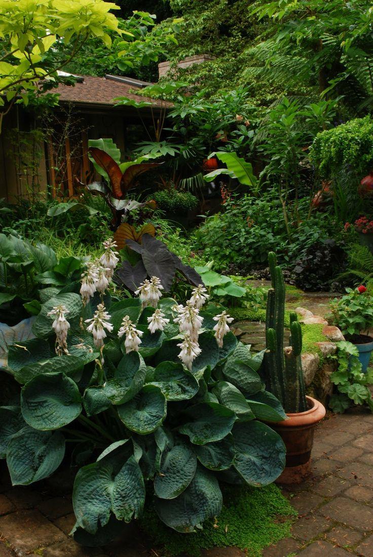 17 Best Images About Hosta On Pinterest Hosta Gardens Shade Plants And Ferns