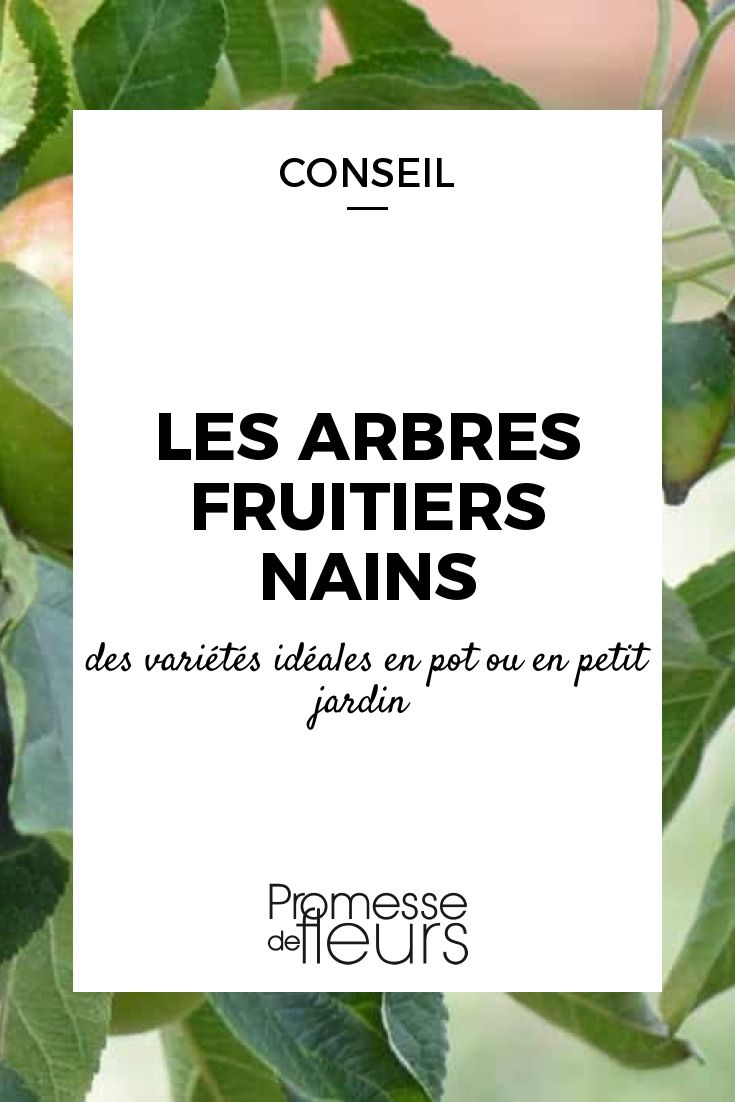 les 25 meilleures id es de la cat gorie arbre fruitier nain sur pinterest nature verte jardin. Black Bedroom Furniture Sets. Home Design Ideas