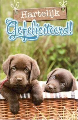Hartelijk gefeliciteerd Felicitatiekaarten met hondjes - puppies Verjaardagskaarten met dieren
