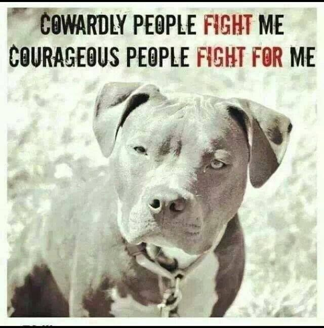 BE  their voice and help stop animals abuse. If you see it, hear it, or suspect it, REPORT IT,  PLEASE HELP SAVE A LIFE.