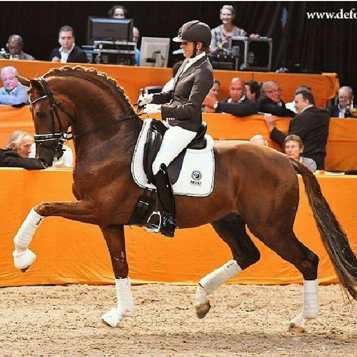 Emmelie Scholtens Chatmeur dressage stallion kwpn