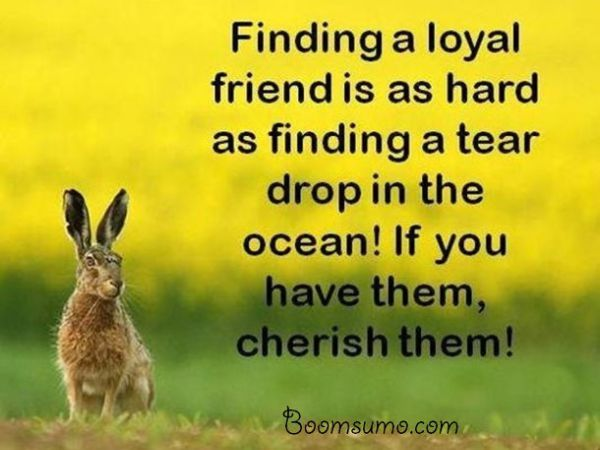Best 25 Family Loyalty Quotes Ideas On Pinterest: 25+ Best Quotes About Loyalty On Pinterest