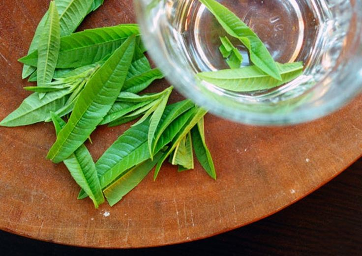 Lemon verbena herb recipes for fish stock