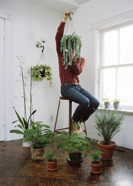 32 best air purifying plants images on pinterest for Ways to hang plants inside